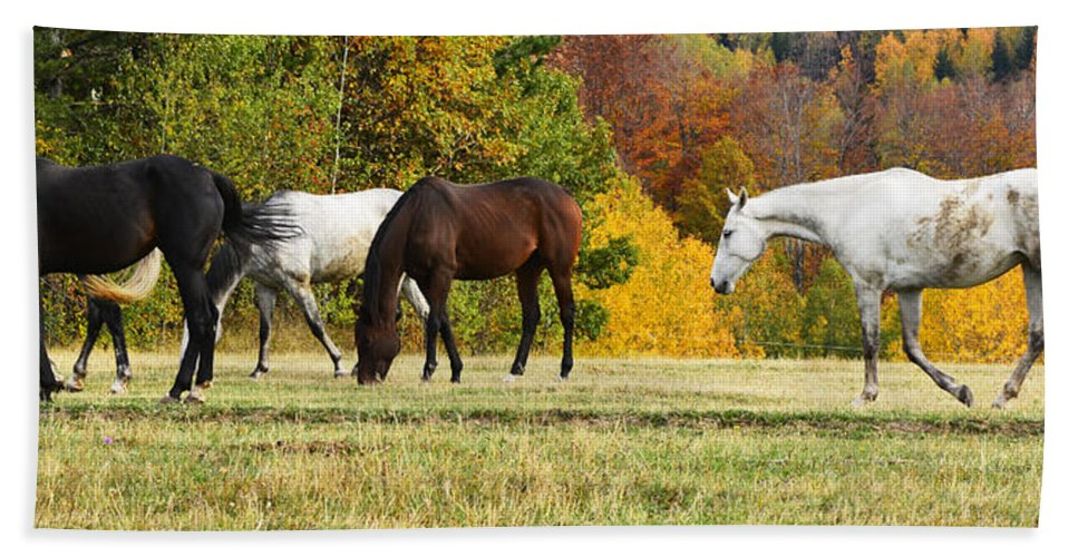 Autumn Hand Towel featuring the photograph Horses In Autumn by Predrag Lukic