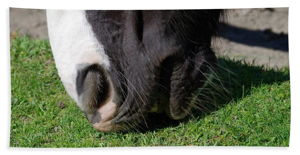 Nature Bath Sheet featuring the photograph Horses Mouth by MJG Products