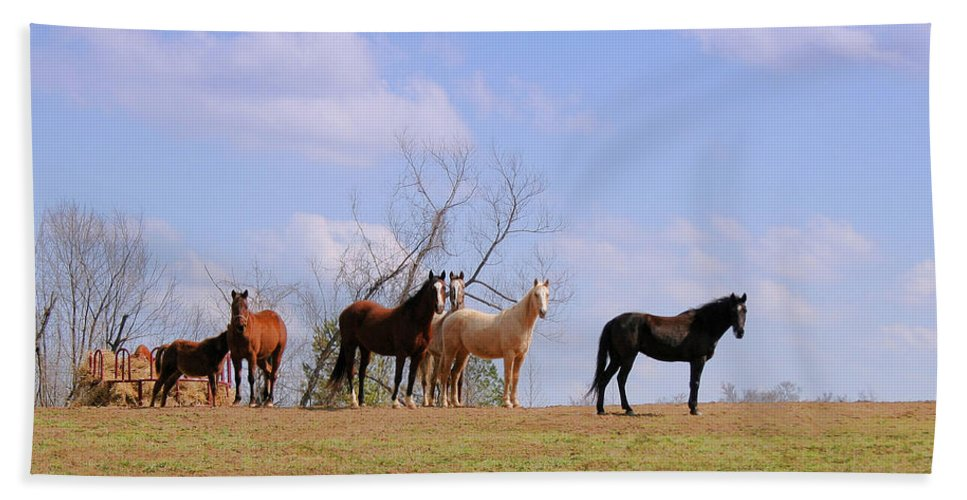 Horses Hand Towel featuring the photograph Horses On The Hill by Bonnie Willis