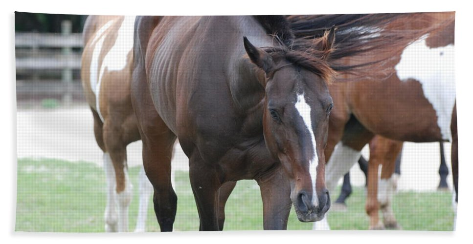Horses Hand Towel featuring the photograph Horses by Rob Hans