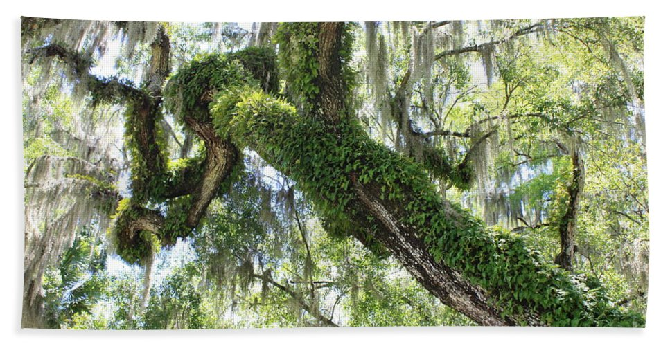 Tree Bath Sheet featuring the photograph Host Tree by Carol Groenen
