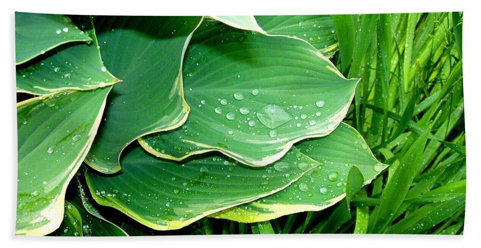 Hostas Hand Towel featuring the photograph Hosta Leaves And Waterdrops by Nancy Mueller
