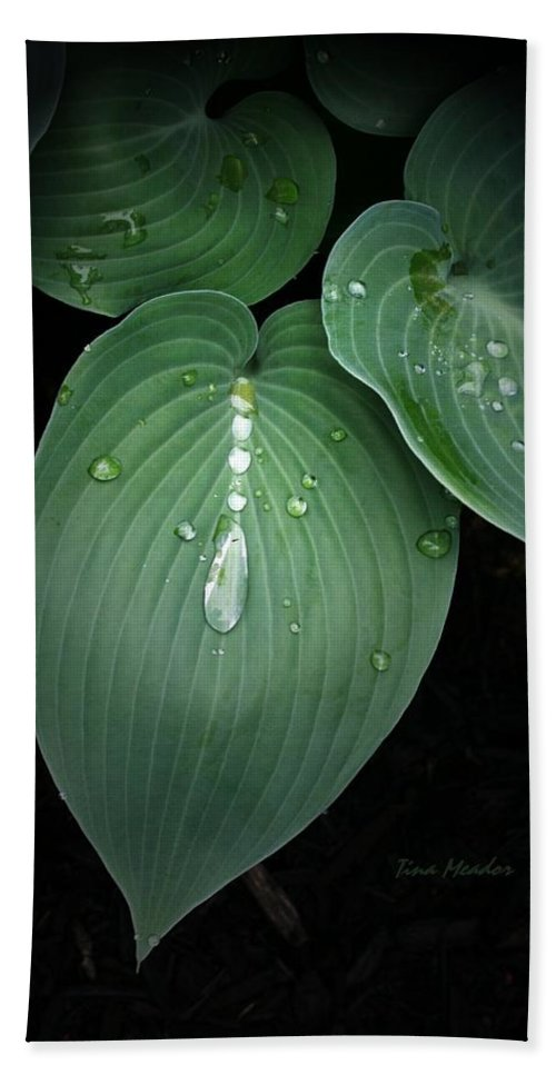 Hostas Bath Towel featuring the photograph Hostas After The Rain by Tina Meador