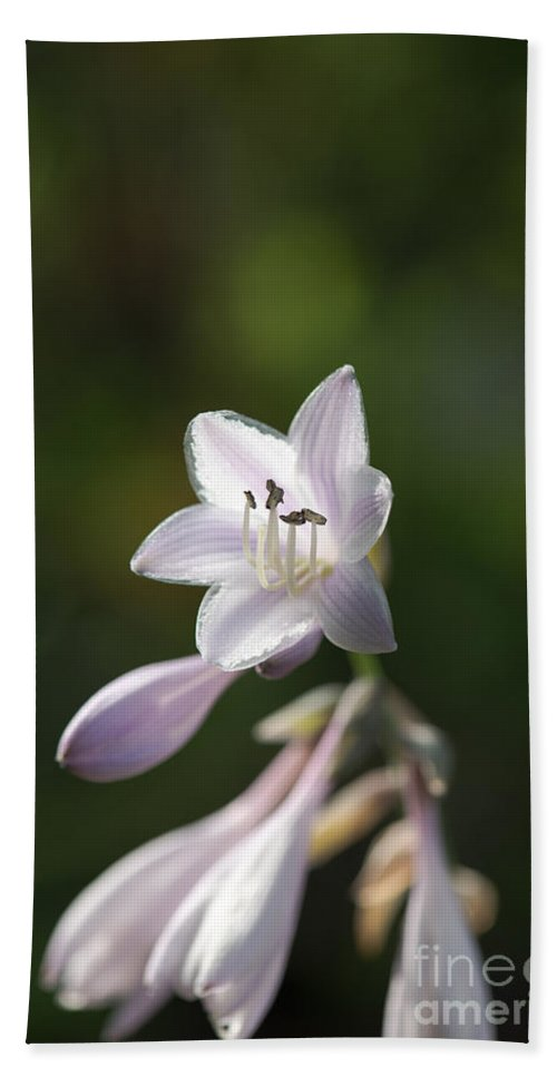 Flowers Bath Sheet featuring the photograph Hostas by Sherman Perry