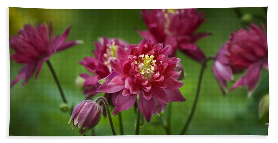 Columbine Hand Towel featuring the photograph Hot Pink Columbine by Teresa Mucha