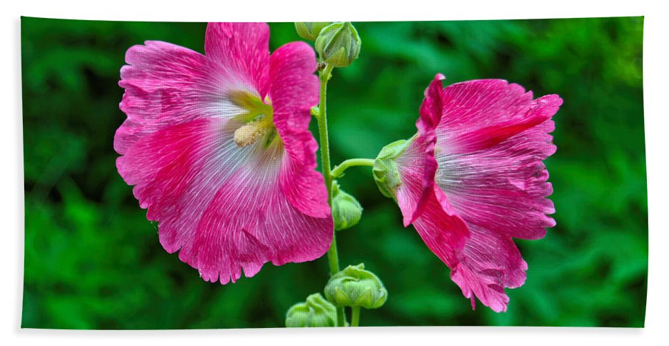 Hollyhock Flower Photography Hand Towel featuring the photograph Hot Pink Hollyhock by Kathleen Sartoris