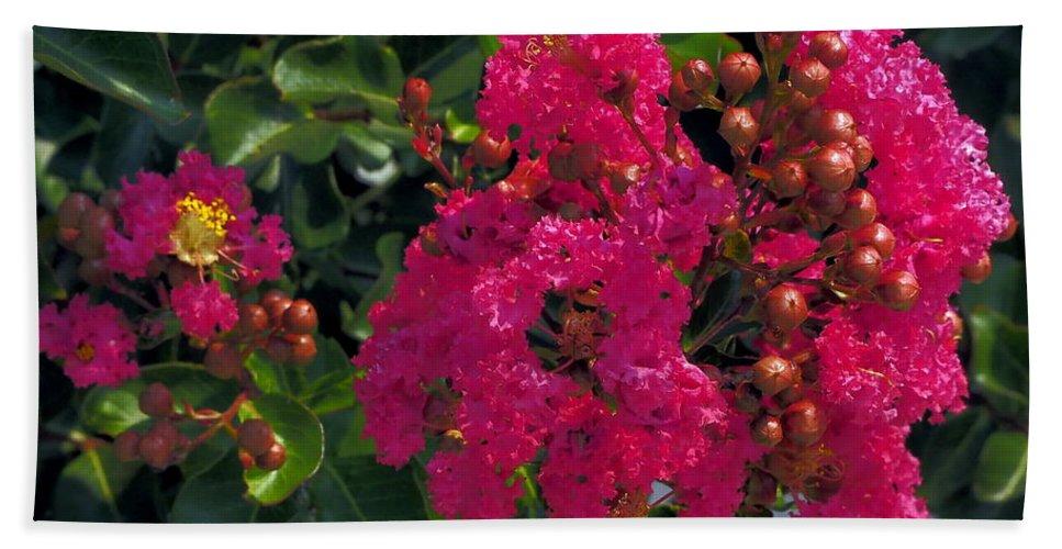 Blooming Hand Towel featuring the photograph Hot Pink Jacaranda by Richard Thomas