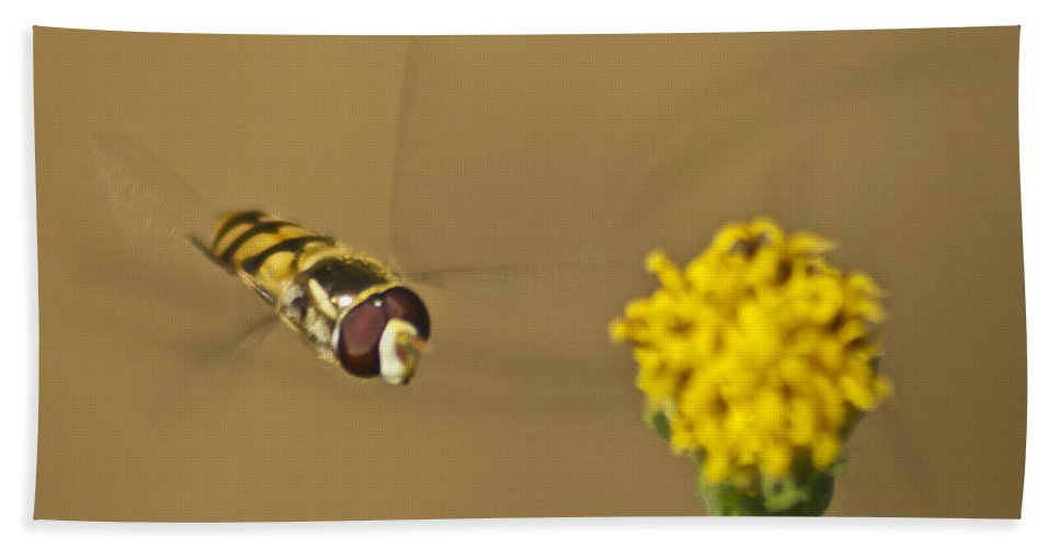 Wildlife Hand Towel featuring the photograph Hoverfly by Michael Peychich