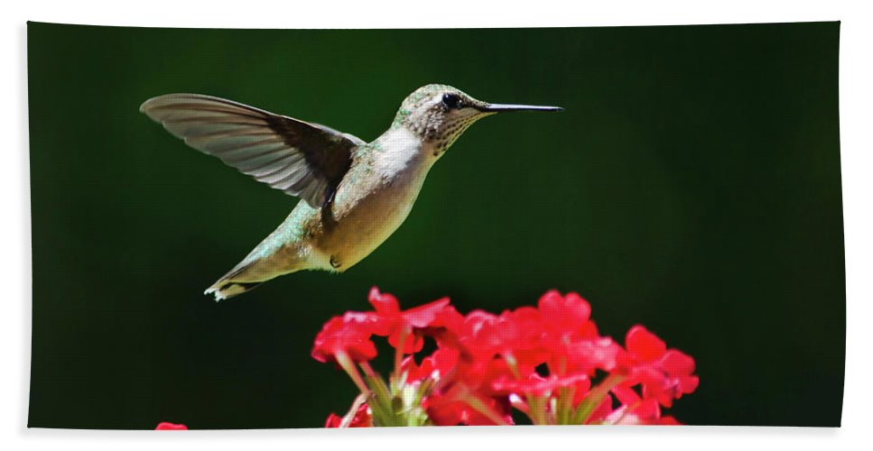 Hummingbird Hand Towel featuring the photograph Hovering Hummingbird by Christina Rollo