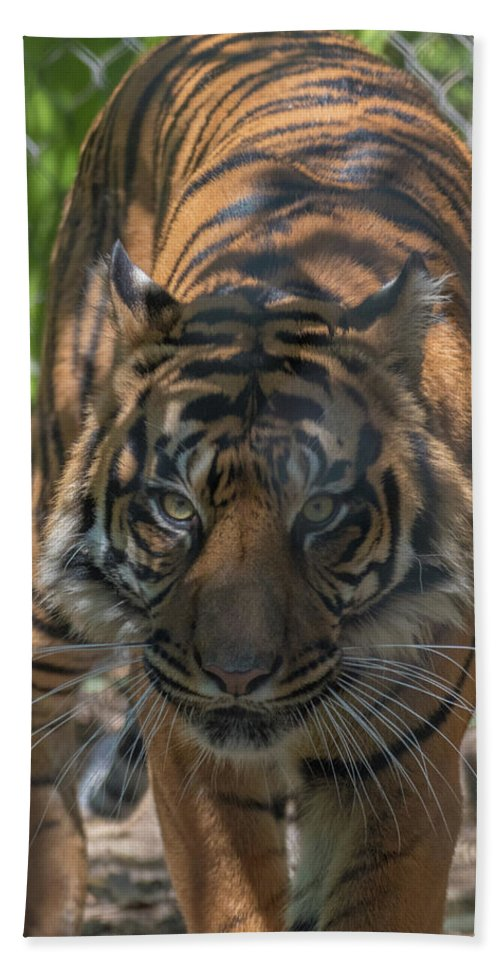 Tiger Bath Sheet featuring the photograph How Quickly Can You Run? by Andrew Lelea