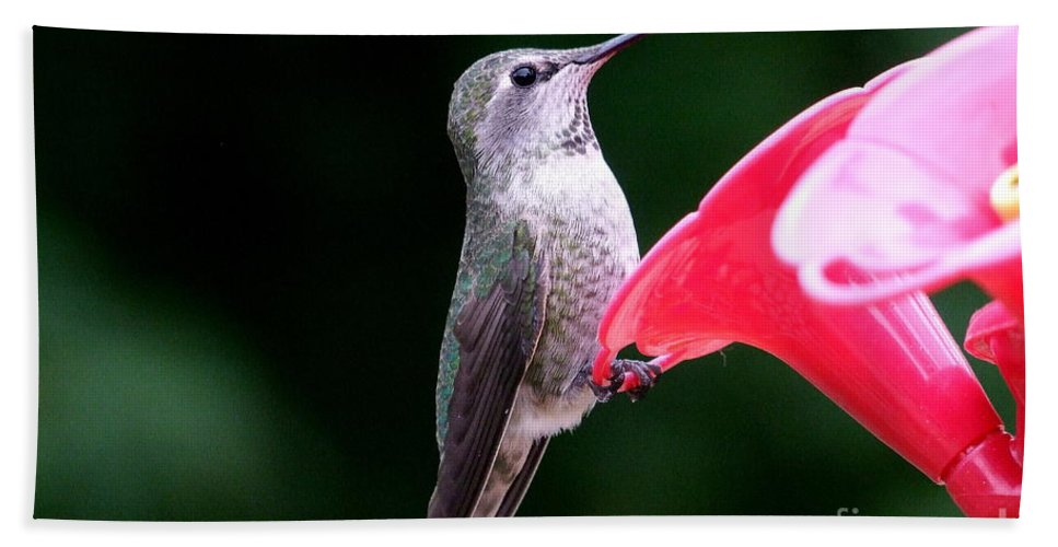 Red Bath Sheet featuring the photograph Hummingbird 23 by Mary Deal