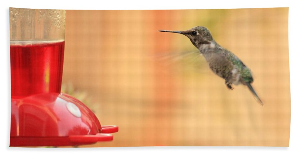 Hummingbird Hand Towel featuring the photograph Hummingbird And Feeder by Carol Groenen