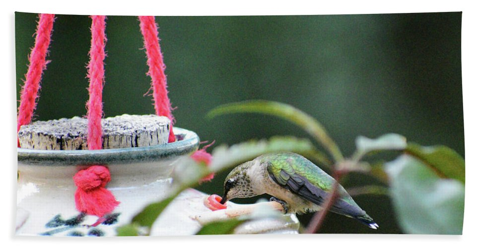 Hummingbird Bath Sheet featuring the photograph Hummingbird At Sunrise 1st Sip by Thomas Woolworth