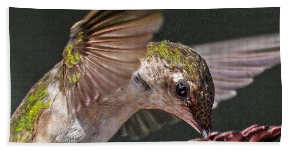 Hummingbird Bath Sheet featuring the photograph Hummingbird. by Betsy Knapp