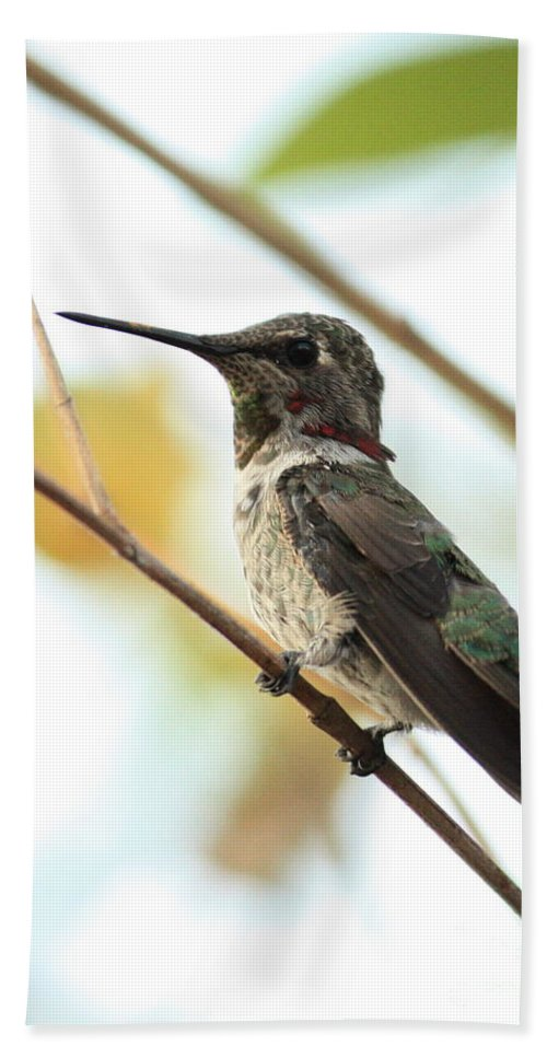 Hummingbird Bath Sheet featuring the photograph Hummingbird Between Branches by Carol Groenen