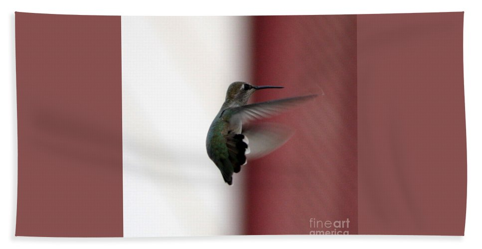 Hummingbird Bath Towel featuring the photograph Hummingbird Changing Course by Carol Groenen
