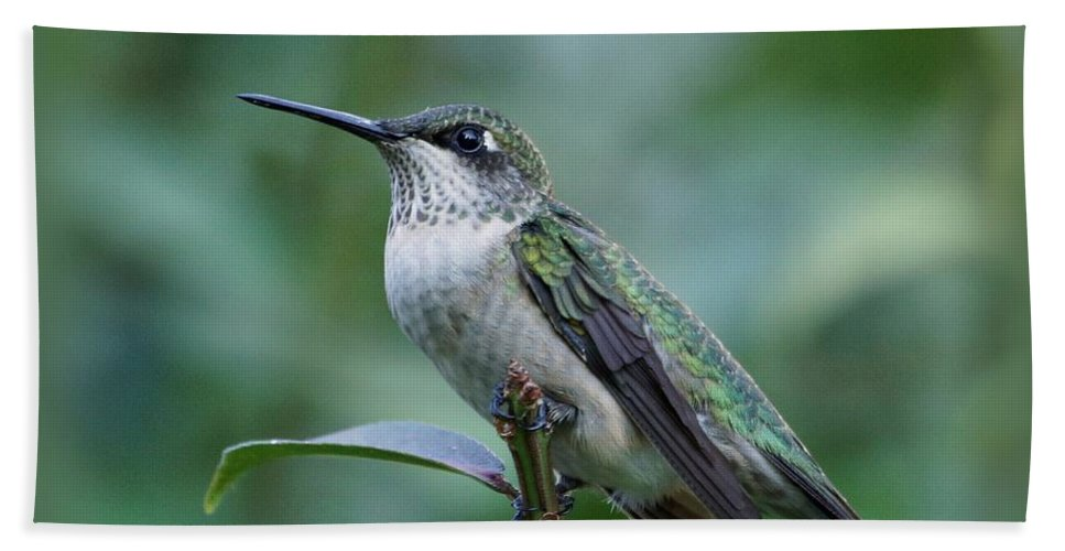 Hummingbird Bath Sheet featuring the photograph Hummingbird Close-up by Sandy Keeton
