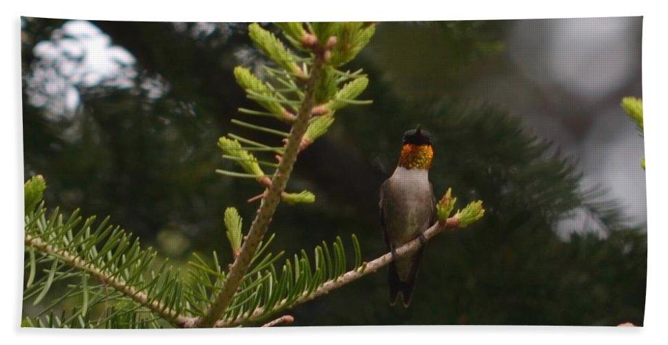 Humming Bird Hand Towel featuring the photograph Hummingbird Flashing by Hella Buchheim