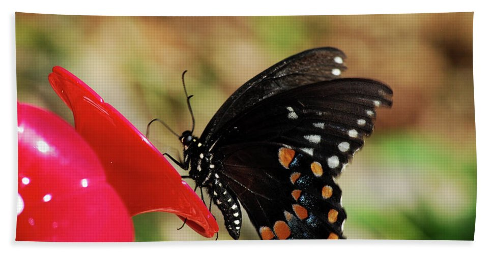 Butterfly Hand Towel featuring the photograph Hummingbird Imposter by Lori Tambakis