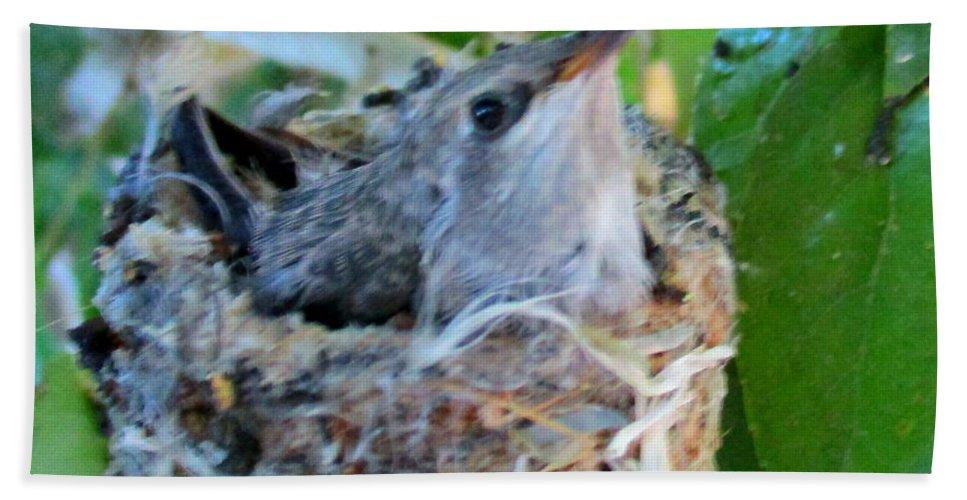 Hummingbird Bath Sheet featuring the photograph Hummingbird In Nest 1 by Randall Weidner