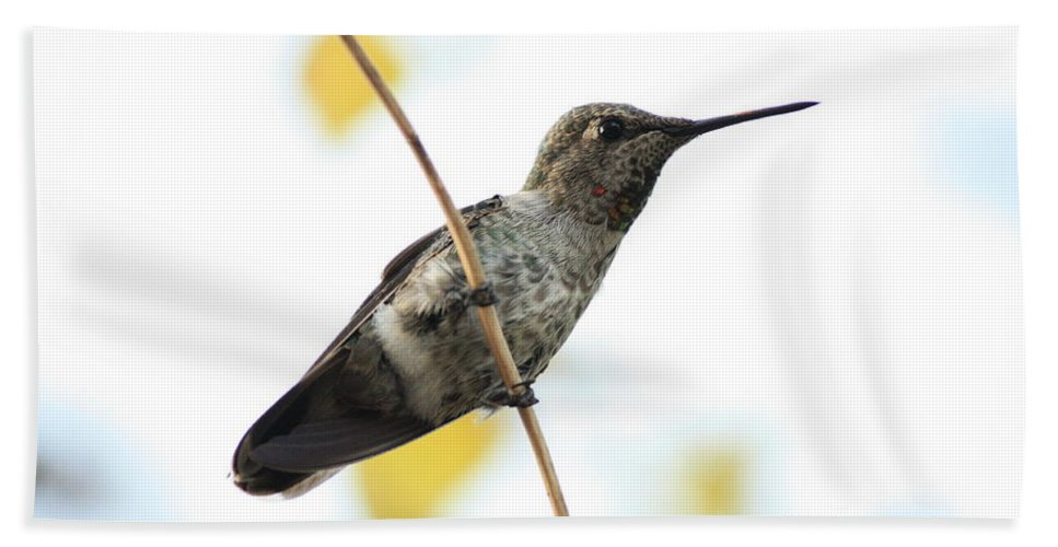 Hummingbird Hand Towel featuring the photograph Hummingbird On Tightrope by Carol Groenen