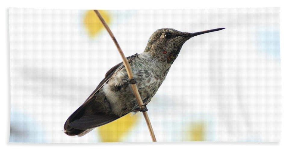 Hummingbird Bath Sheet featuring the photograph Hummingbird On Tightrope by Carol Groenen