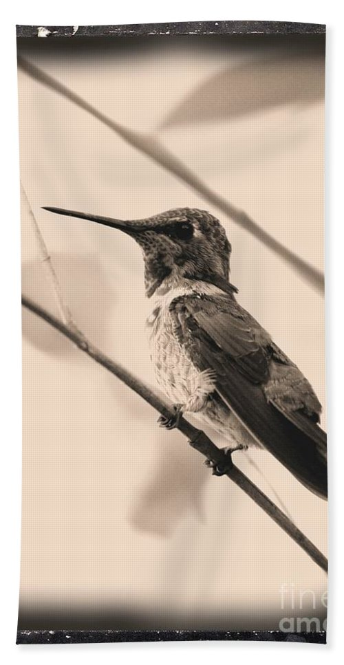 Hummingbird Bath Sheet featuring the photograph Hummingbird With Old-fashioned Frame 3 by Carol Groenen