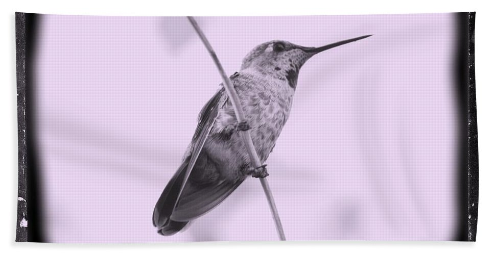 Hummingbird Bath Sheet featuring the photograph Hummingbird With Old-fashioned Frame 4 by Carol Groenen