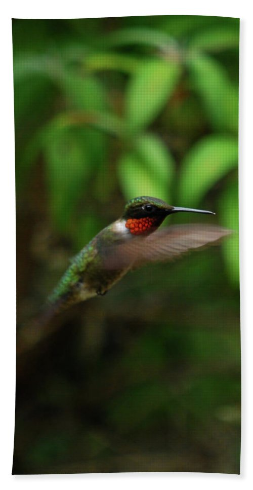 Hummingbird Hand Towel featuring the photograph Hummmm by Lori Tambakis