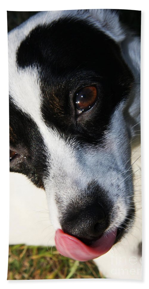 Pet Hand Towel featuring the photograph Hungry Dog by Jorgo Photography - Wall Art Gallery