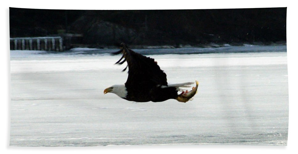 American Eagle Bird Flying Wings Fish Nature Wild Animal Bath Sheet featuring the photograph Hungry Eagle by Andrea Lawrence