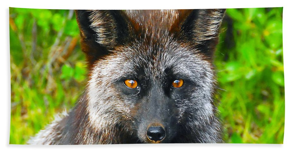 Gray Fox Bath Towel featuring the photograph Hungry Eyes by David Lee Thompson
