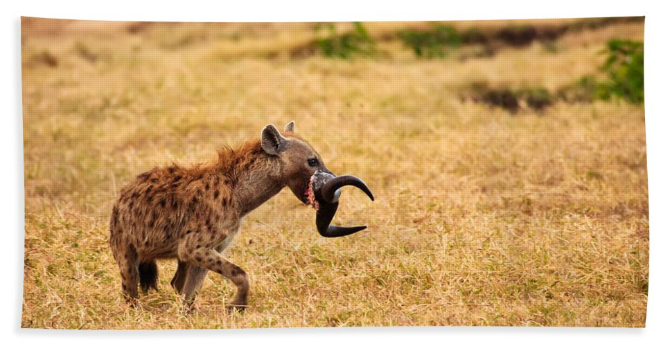3scape Photos Hand Towel featuring the photograph Hungry Hyena by Adam Romanowicz