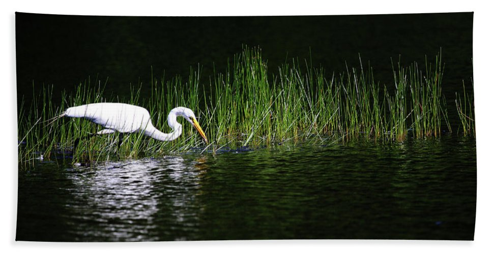 Egret Bath Sheet featuring the photograph Hunting by Karol Livote