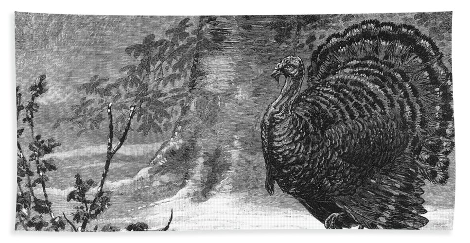 1886 Bath Sheet featuring the photograph Hunting: Wild Turkey, 1886 by Granger