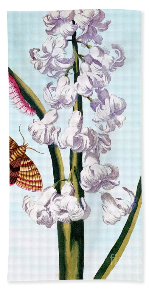 Hyacinth Hand Towel featuring the painting Hyacinth by Pierre-Joseph Buchoz
