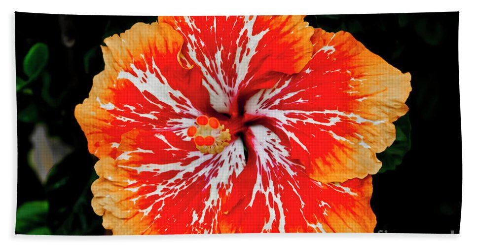 Flower Hand Towel featuring the photograph Hybrid Hibiscus II Maui Hawaii by Jim Cazel