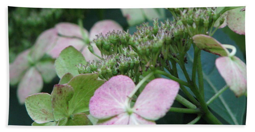 Hydrangea Bath Sheet featuring the photograph Hydrangea by Amanda Barcon