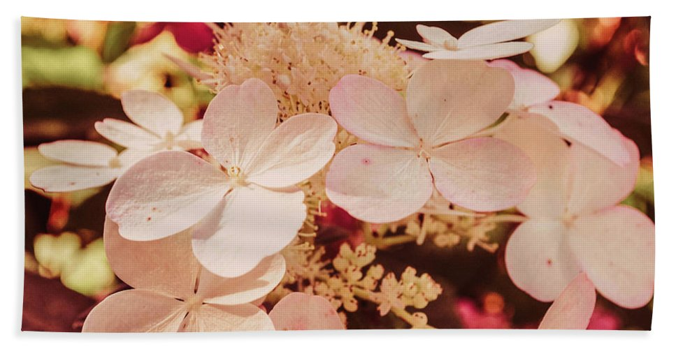 Flower Hand Towel featuring the photograph Hydrangeas 7 by Andrea Anderegg