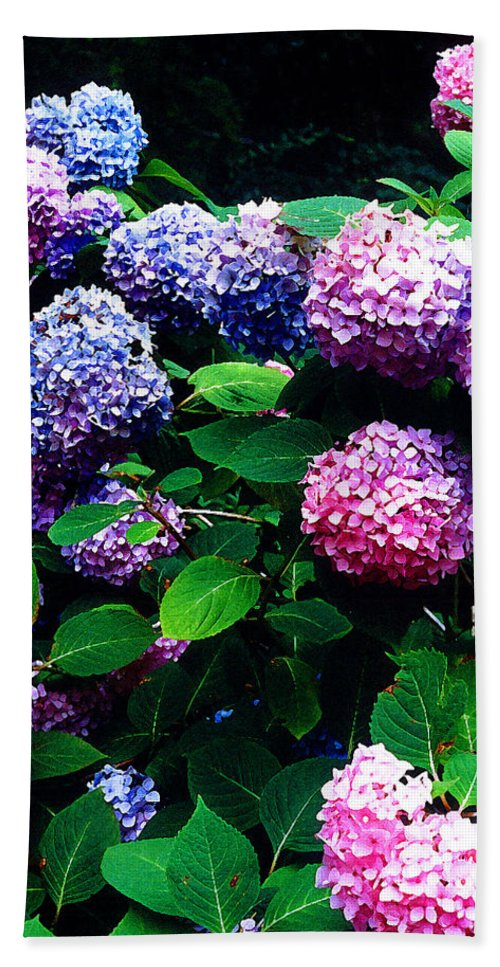 Flowers Bath Towel featuring the photograph Hydrangeas by Nancy Mueller