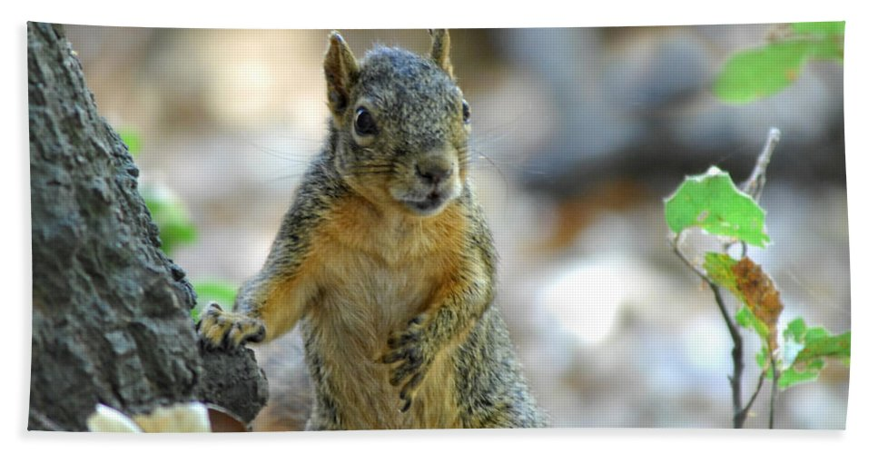 Squirrel Hand Towel featuring the photograph I Ate Too Many Nuts by Donna Blackhall