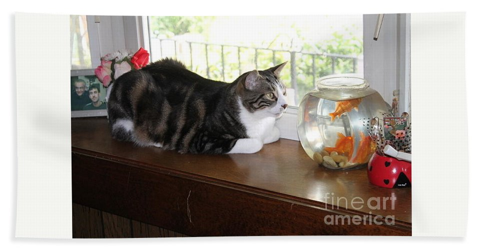 Cat Fish Waiting To Eat Bath Sheet featuring the photograph I Can Almost Taste Them. by Katherine Ruth