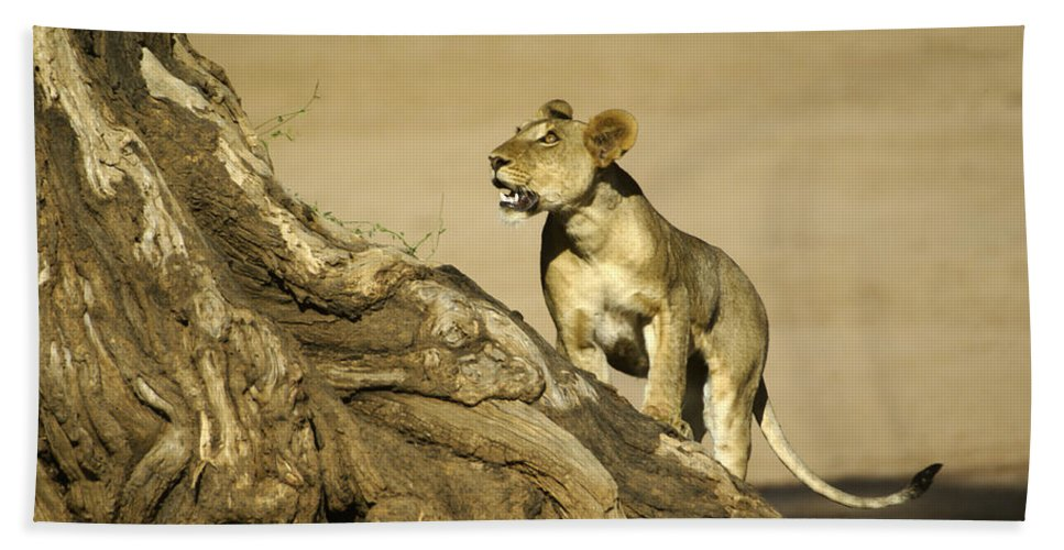 Africa Hand Towel featuring the photograph I Can Do This by Michele Burgess