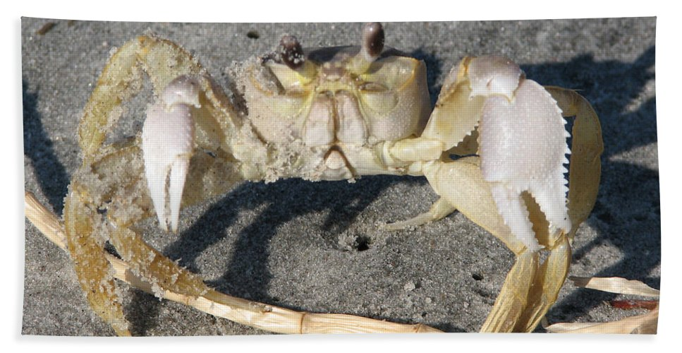 Crab Bath Sheet featuring the photograph I Feel Crabby by Stacey May