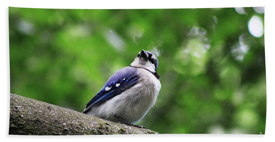 Bluejay Hand Towel featuring the photograph I Hear Something by Alyce Taylor