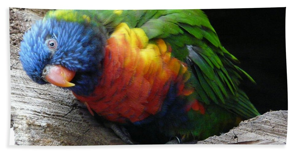 Bird Hand Towel featuring the photograph I Hear You by Valerie Ornstein