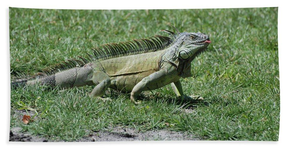 Macro Bath Sheet featuring the photograph I Iguana by Rob Hans