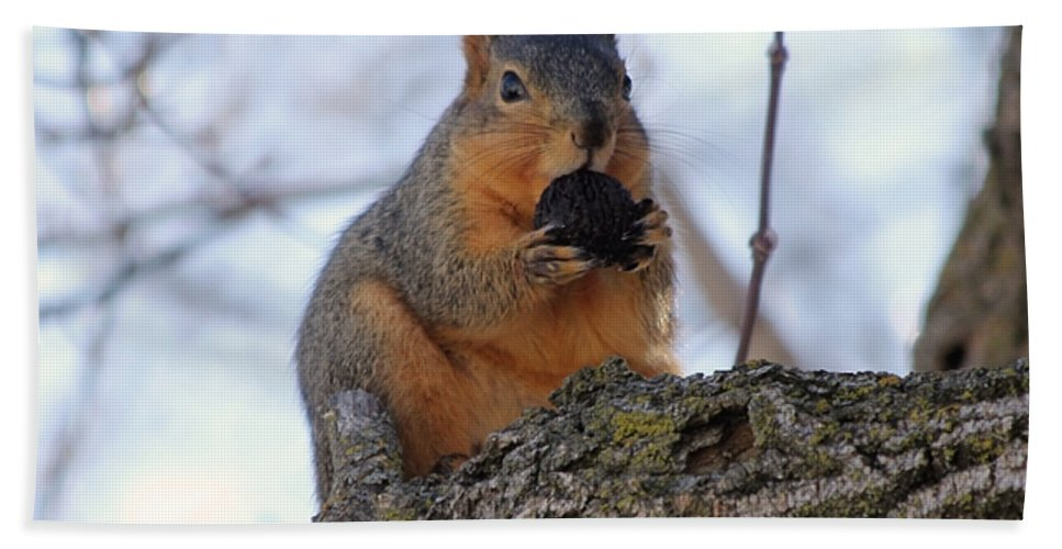Squirrel Hand Towel featuring the photograph I Know I Can Make It Fit by Lori Tordsen