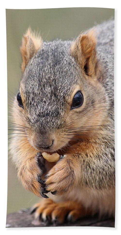 Squirrel Hand Towel featuring the photograph I Love Peanuts by Lori Tordsen