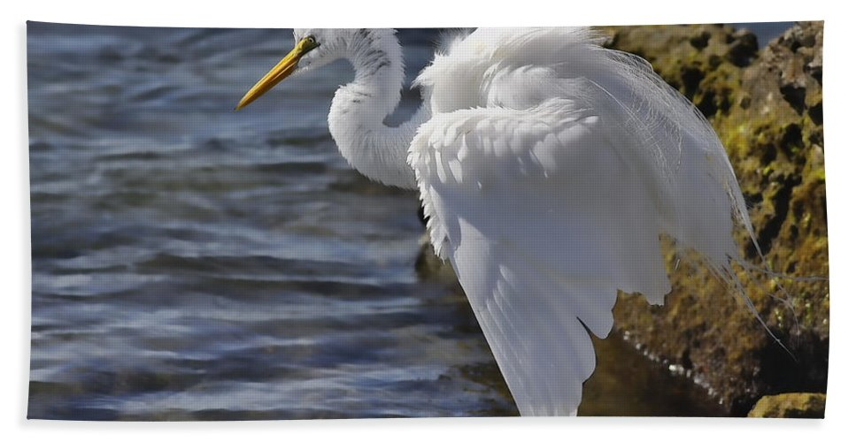 Giant Egret Bath Sheet featuring the photograph I Need To Fluff by Deborah Benoit